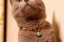 猫の首輪と鈴