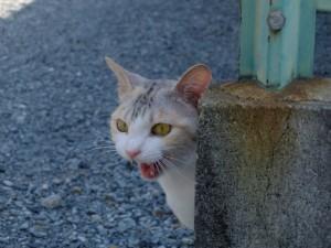 猫の去勢のメリット・デメリット