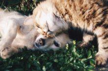 猫と犬の同居