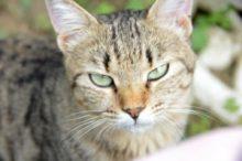 猫の避妊手術のメリット・デメリット