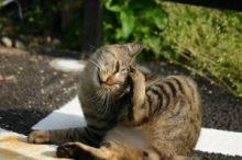 猫のアレルギー検査