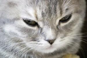 猫の避妊手術の費用