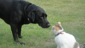 猫と犬の相性