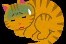 猫インフルエンザ