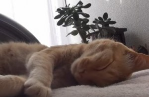 猫風邪の症状