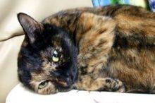 猫の花粉症の症状