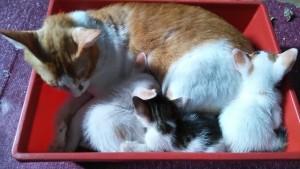 ワクチン接種前の子猫